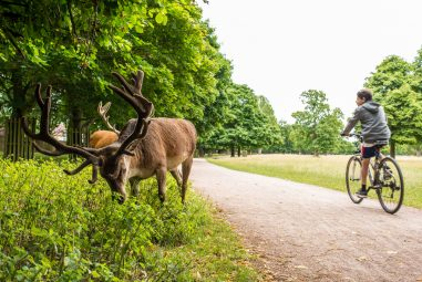 Richmond Park Set for Managed Re-Opening in June